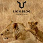 【LION BLOG】記事ページ内のアイキャッチ画像を削除