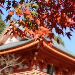 紅葉見頃の第二十五番札所 播州清水寺