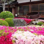 心月院 日本庭園を彩るツツジ 兵庫県三田市